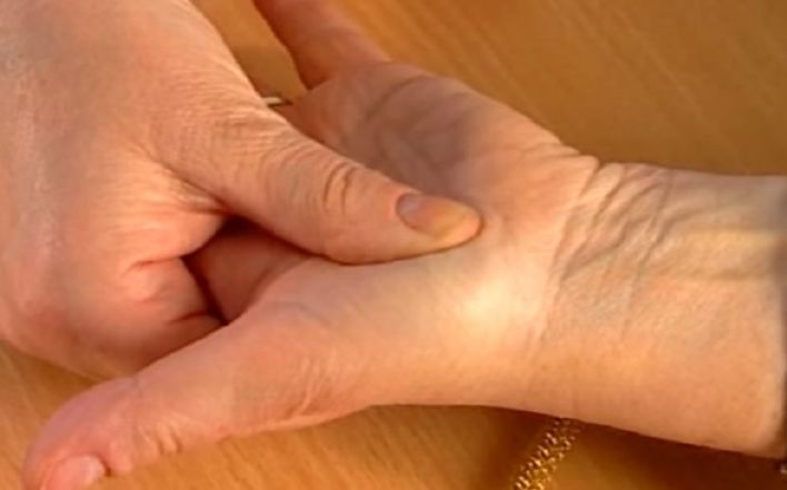 organizam-na-dlanu-2