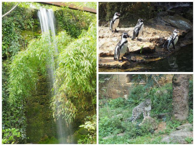 zoo-doue-la-fontaine