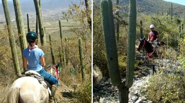 balade-cheval-mexique
