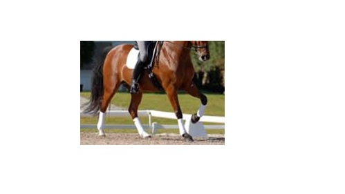 Novice Test - Counter Canter