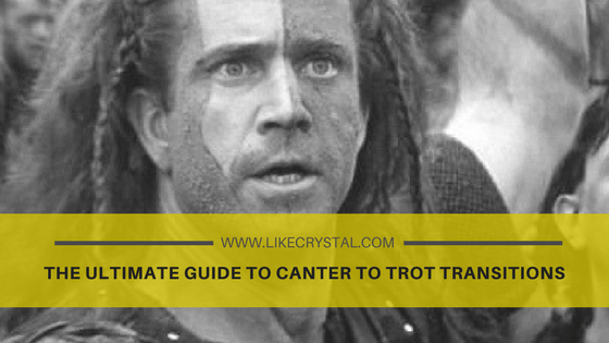The Ultimate Guide to Canter to Trot Transitions