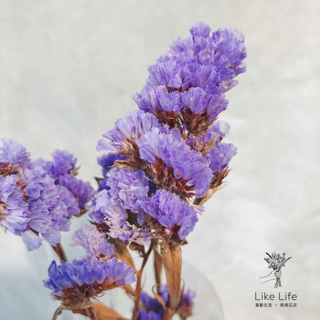 乾燥花與永生花差別-星辰花