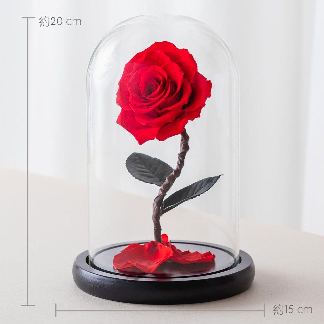 永生花玫瑰,紅色永生花玫瑰公分