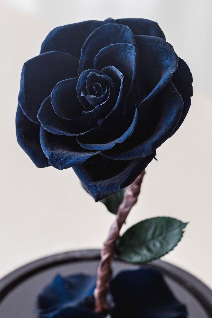 永生花玻璃盅罩-黑色永生花特寫