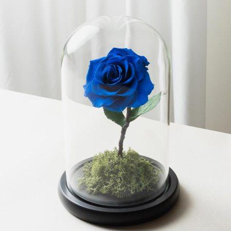 寶藍色永生玫瑰花玻璃罩封面-喜歡生活乾燥花店