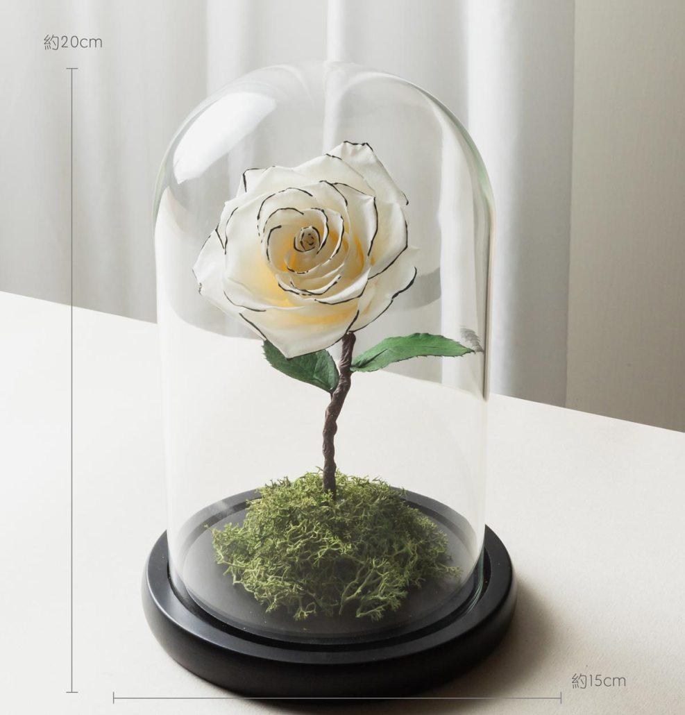 白色永生玫瑰花尺寸照片,白色永生玫瑰花玻璃罩