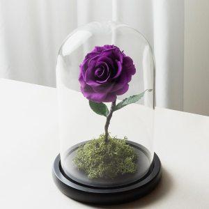 紫色永生玫瑰花玻璃罩封面-喜歡生活乾燥花店