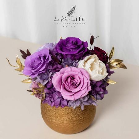 開幕盆栽永生花,金盆開幕盆栽紫色,開幕盆栽紫色推薦