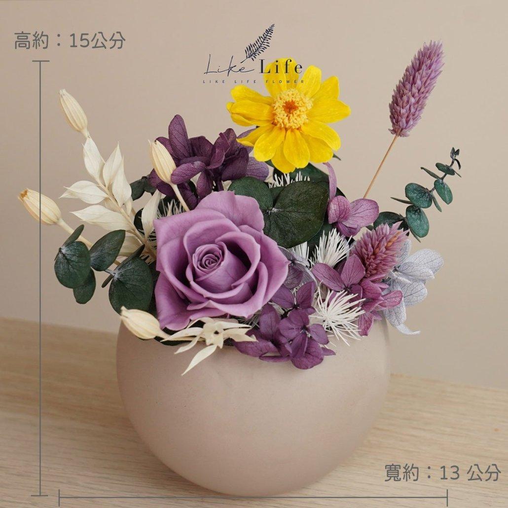 永生花盆栽小型永生花盆栽公分照片紫