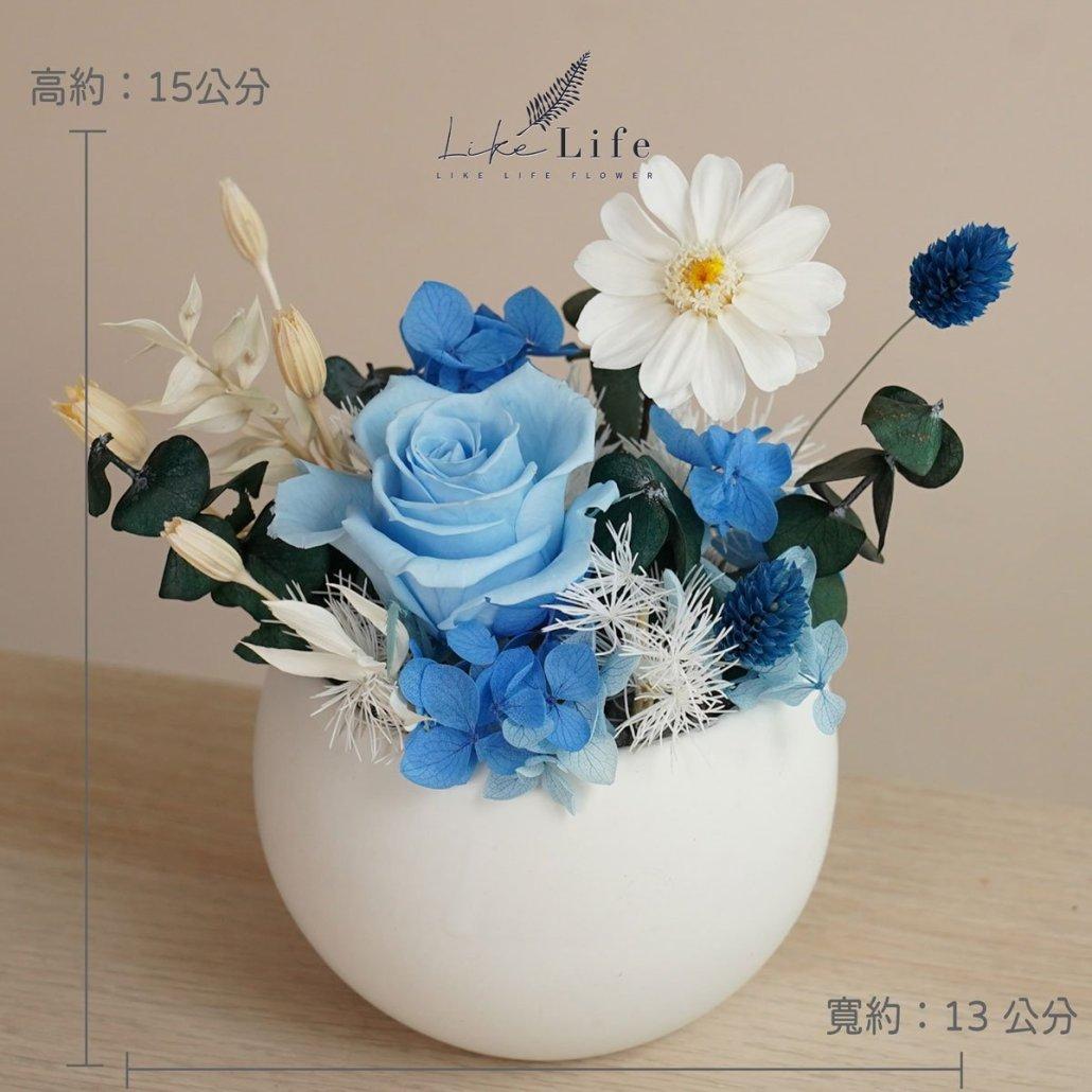 永生花盆栽小型永生花盆栽公分照片藍