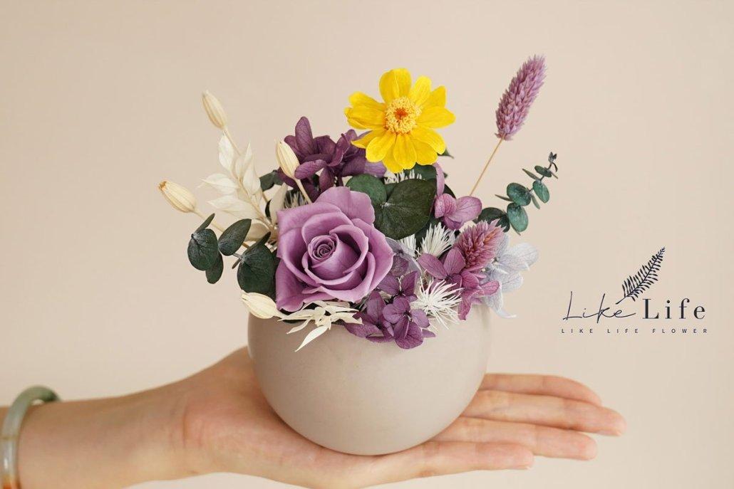 永生花盆栽手拿特寫,紫色永生花
