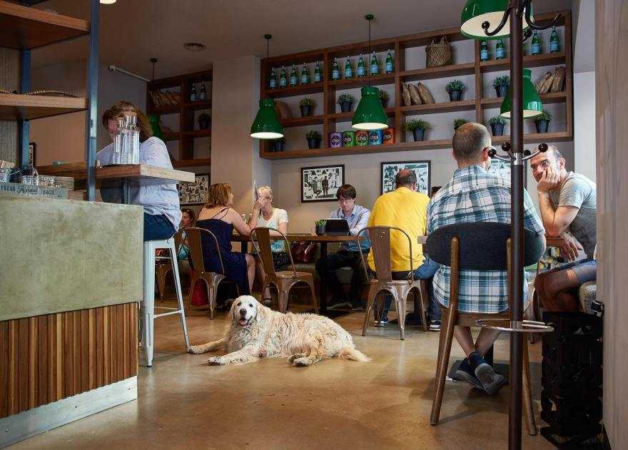 people sat inside coffee shop in budapest with a cream coloured dog laying on the floor