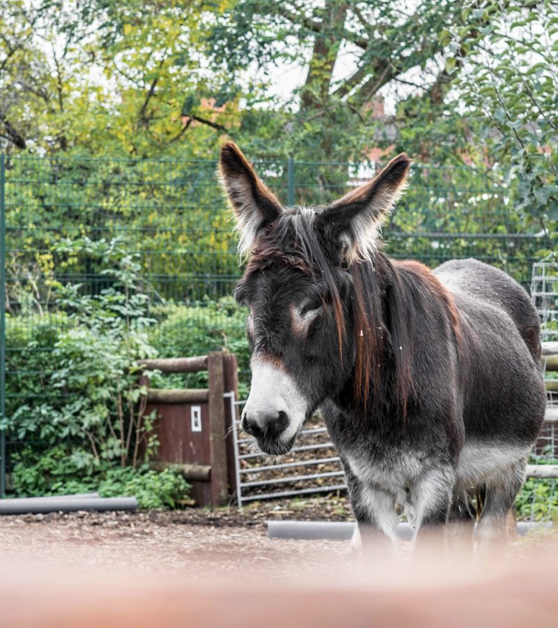Inside Spitalfields City Farm: A Green Oasis in the Big Smoke