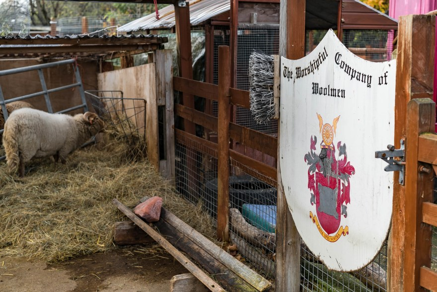 sheep eating hay inside enclosure at spitalfields city farm with a sign that says the