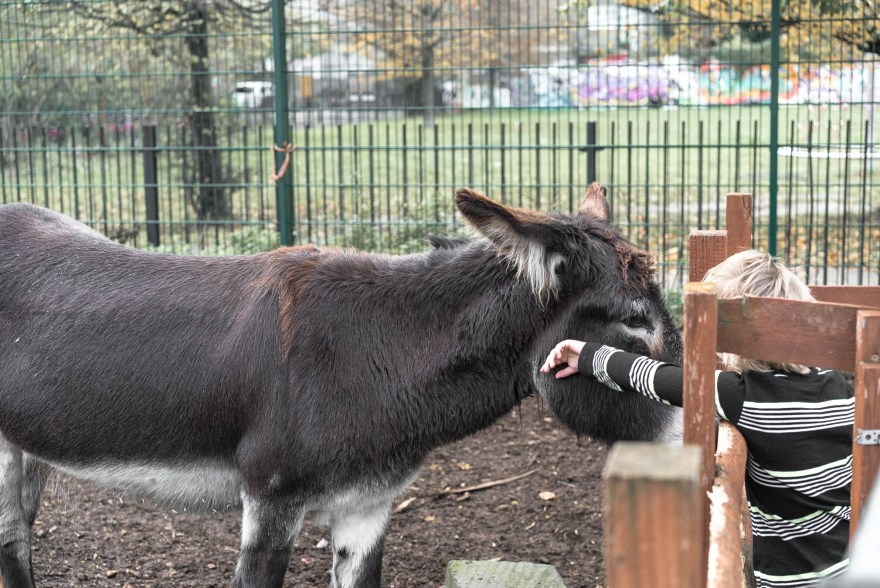 boy with blond hair wearing a black white striped top petting a donkey in Spitalfields city farm.