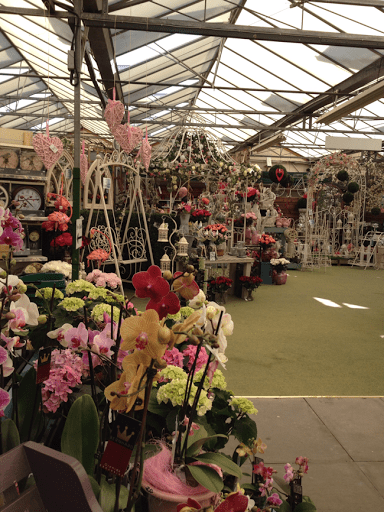A trip to summer hill garden nursery