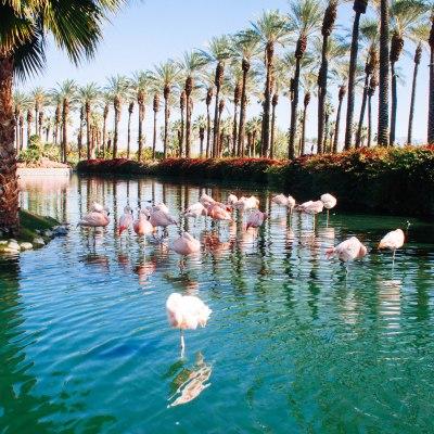 When to Accessorize Flamingo