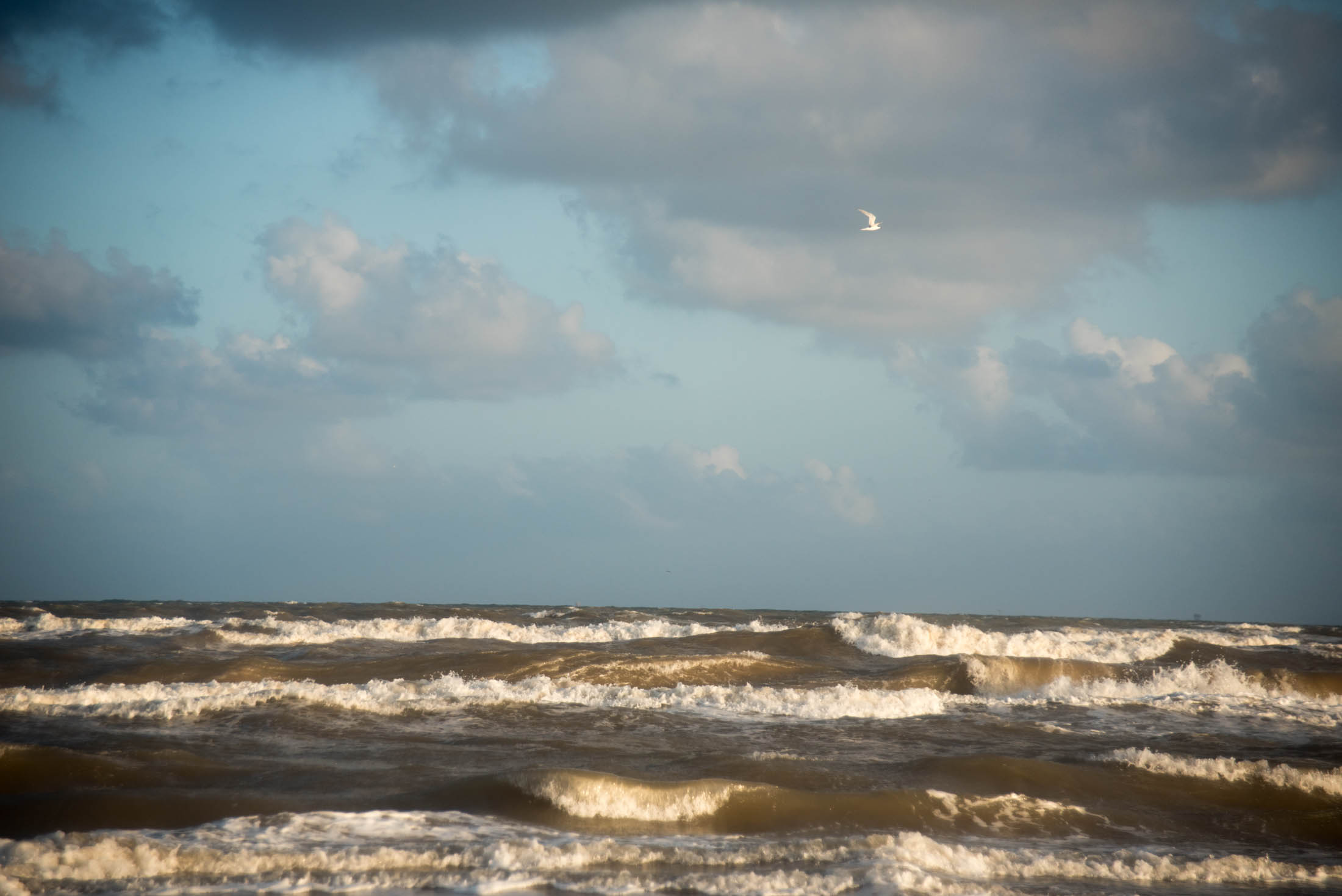 matagorda-beach-july-fourth-16