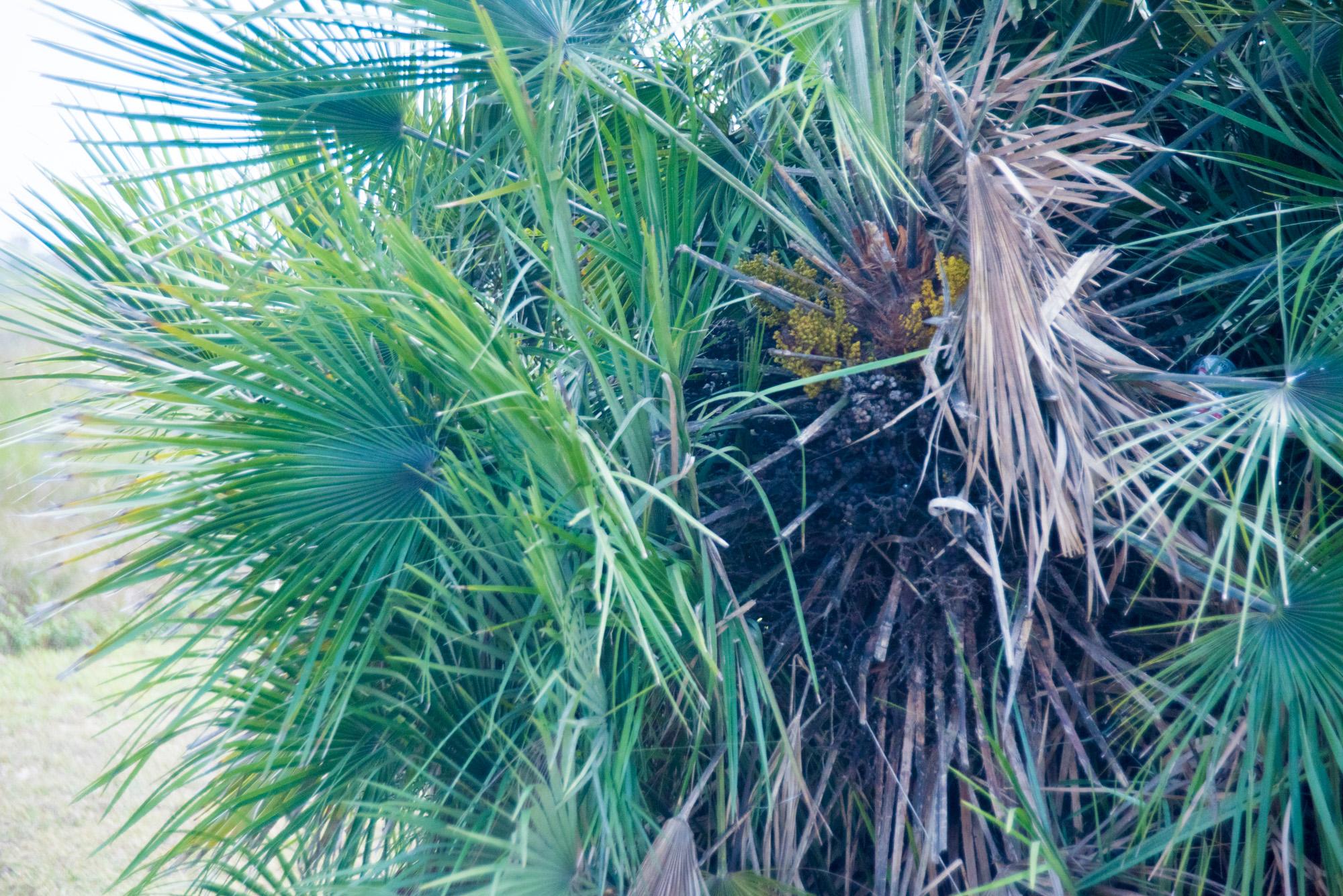 matagorda palms