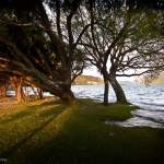 Sunrise behind trees Lake Wanaka (Wanaka, New Zealand Gallery)
