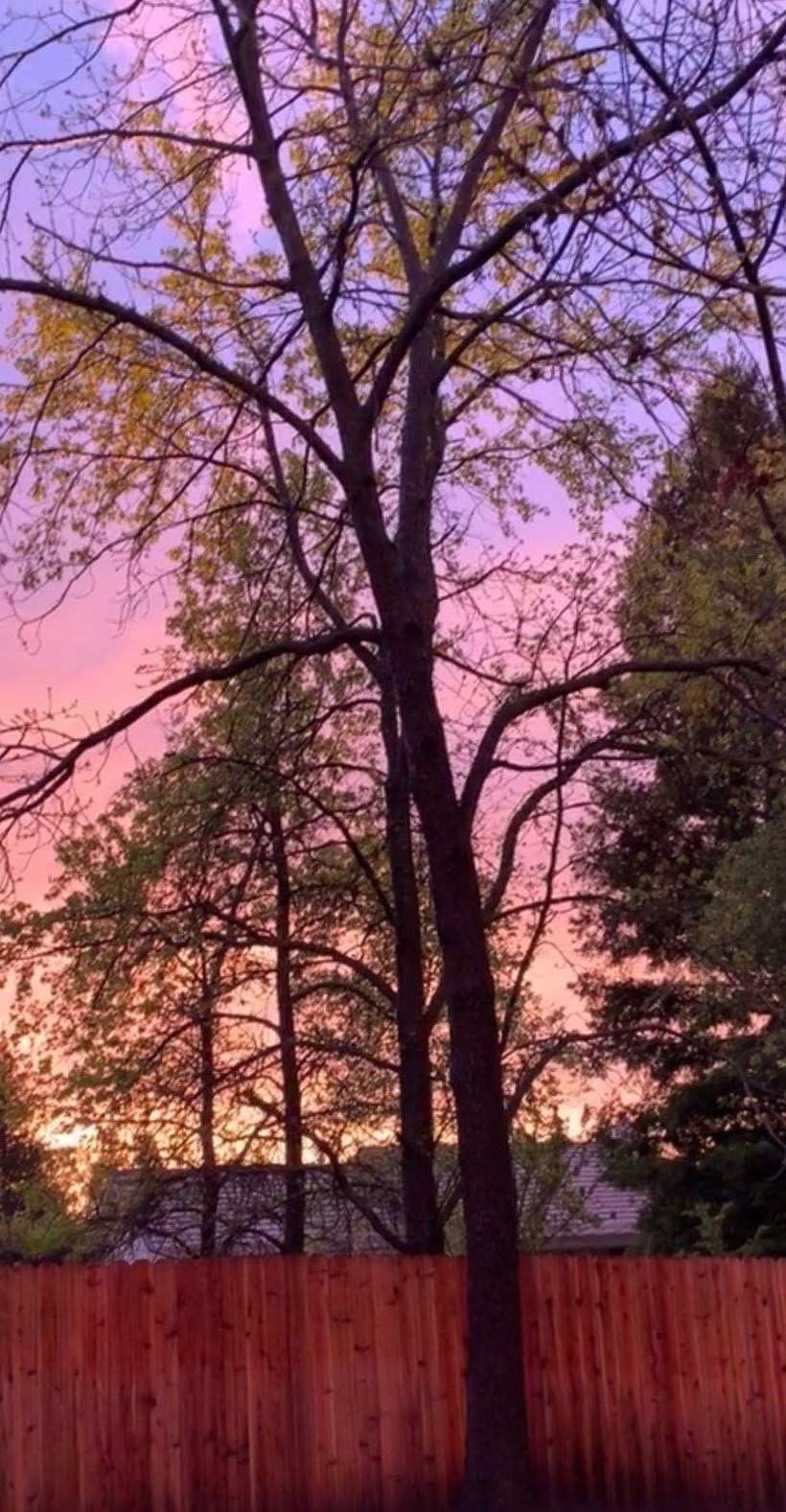 Fence Tree Sunset