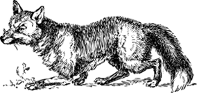 colophon fox