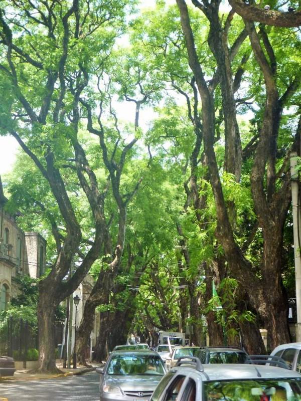 Rua charmosa e cheia de verde em San Isidro | Like Wanderlust