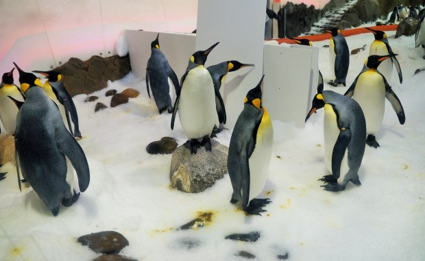 Os Pinguins do Aquário de Melbourne