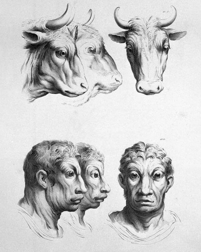Buffalo art resembling a human face