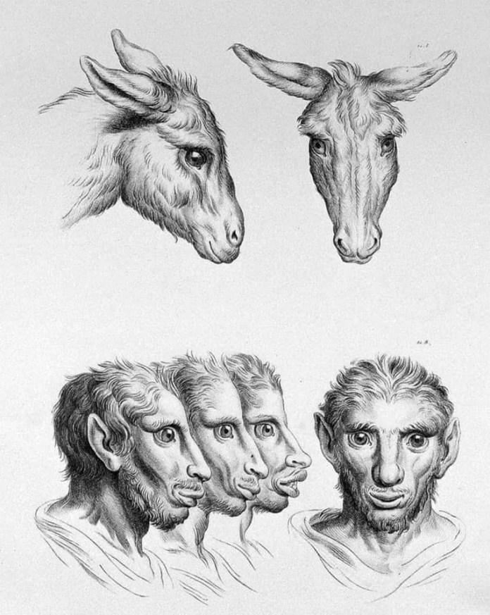 Donkey art resembling a human face