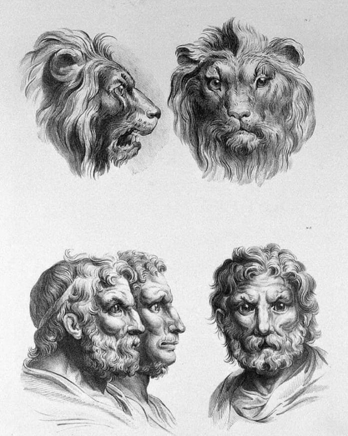 Lion art resembling a human face