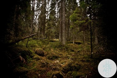 In The Woods - Nuuksio, Helsinki, 2012