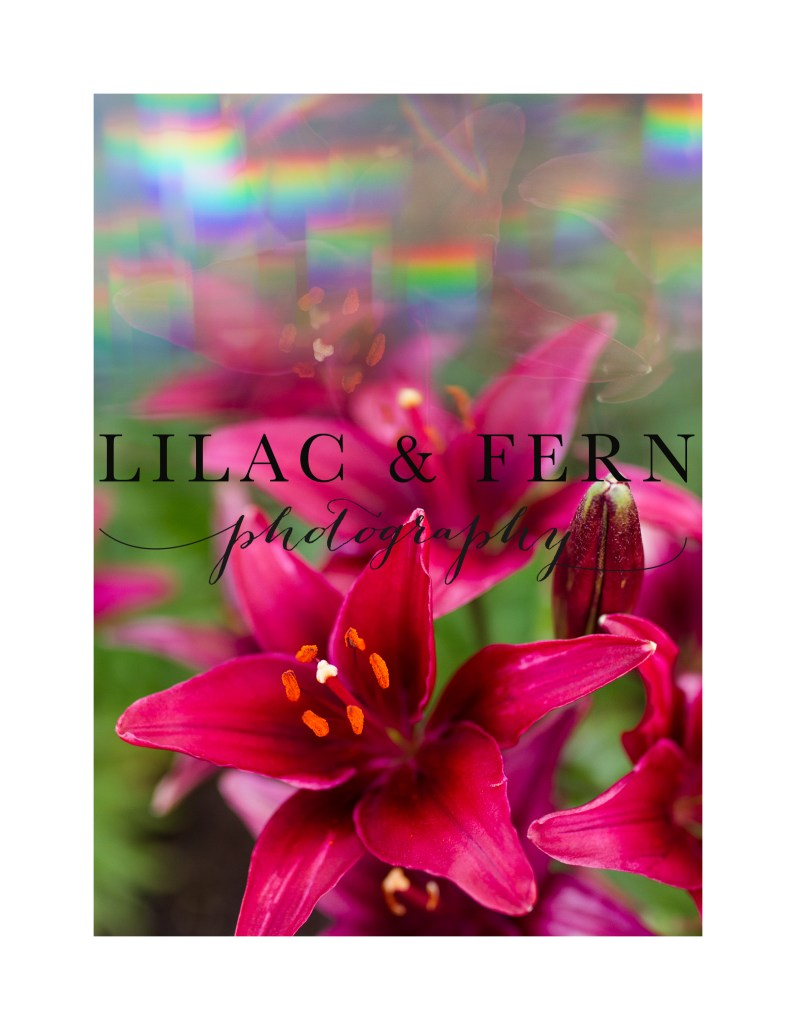 6-Prism Lily