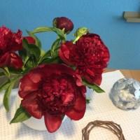 Friday- Flowerday - oder - Pfingstrosen- Liebe