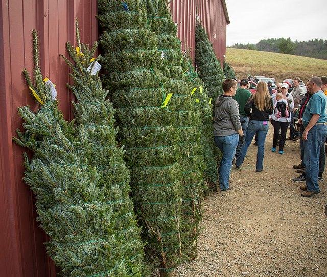 Lil Grandfather Mountain Christmas Tree Farm  Close Close