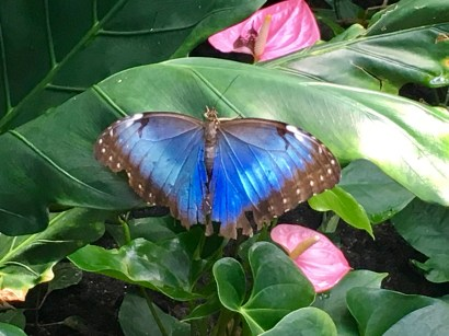 Beautiful butterfly house in Artis zoo, Amsterdam