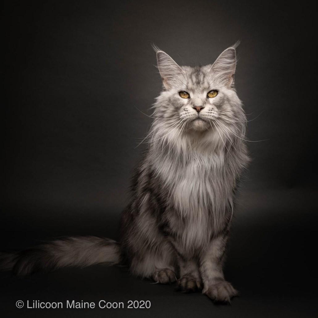 Lilicoon Mia
