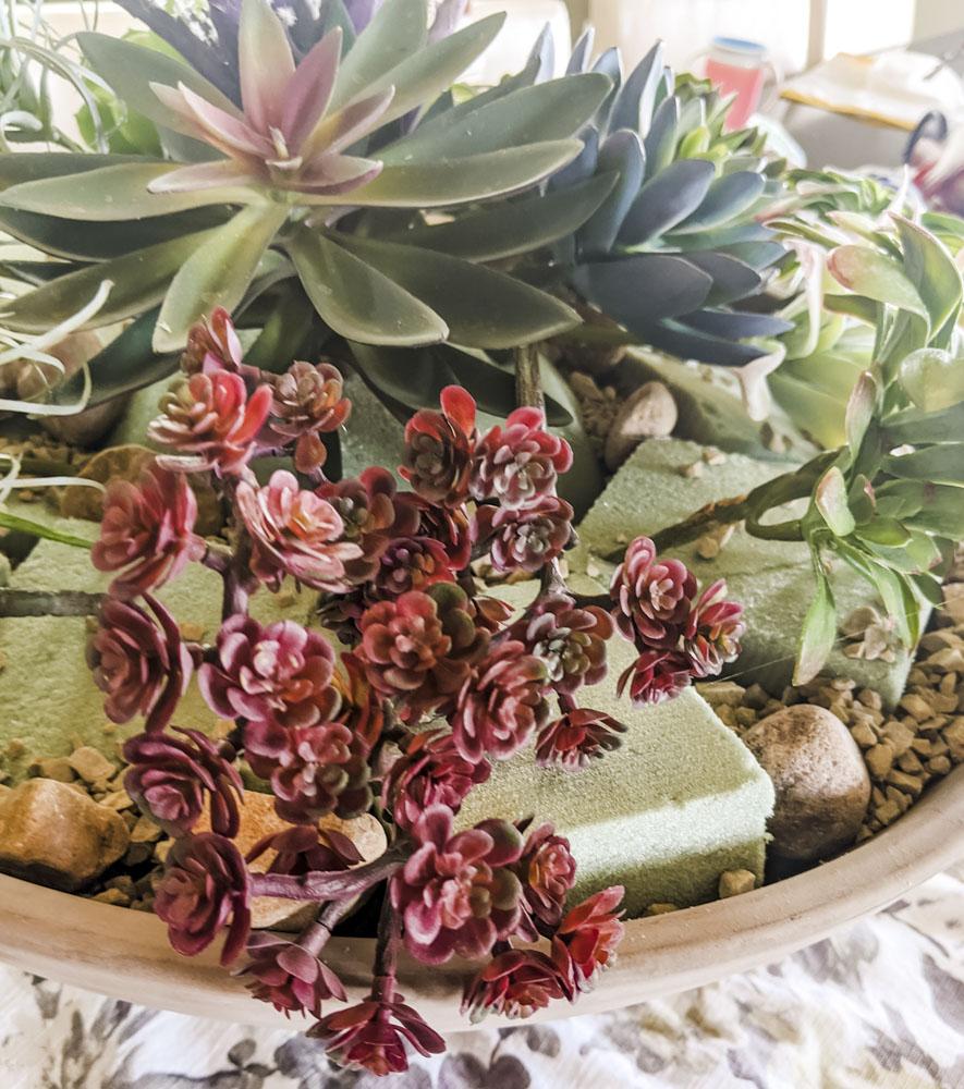 Succulent Layout