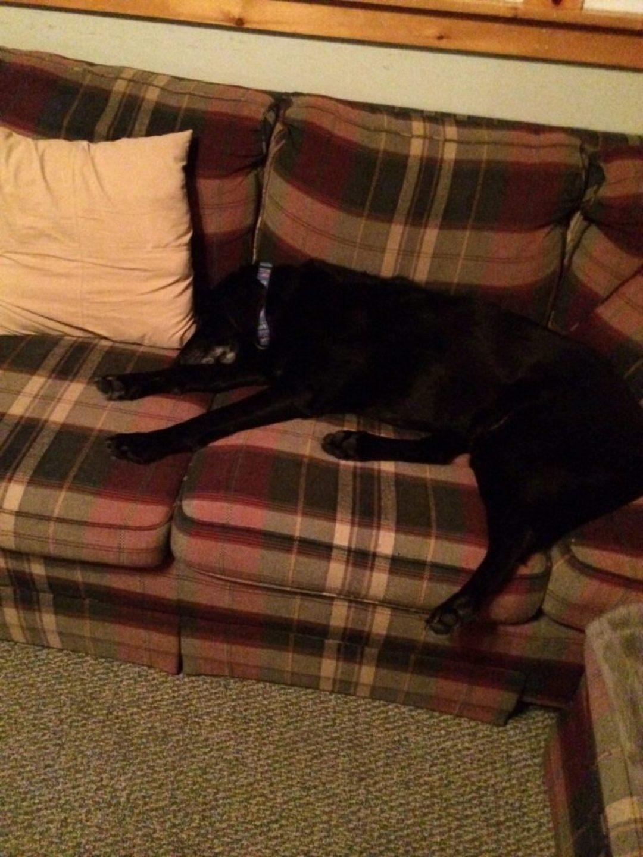 Hayden is pooped