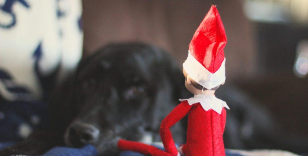 Elf on the Shelf Hayden