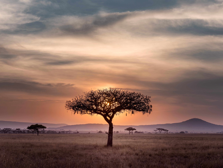 Vous partez en Afrique, les romans à emporter