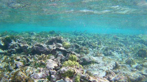 snorkelling aux iles grenadines