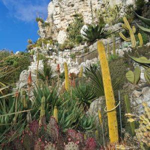 superbe cactus eze