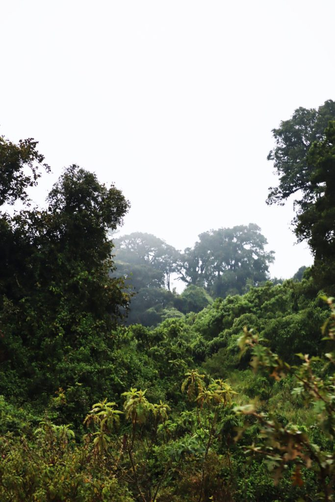 jungle ngorongoro tanzanie