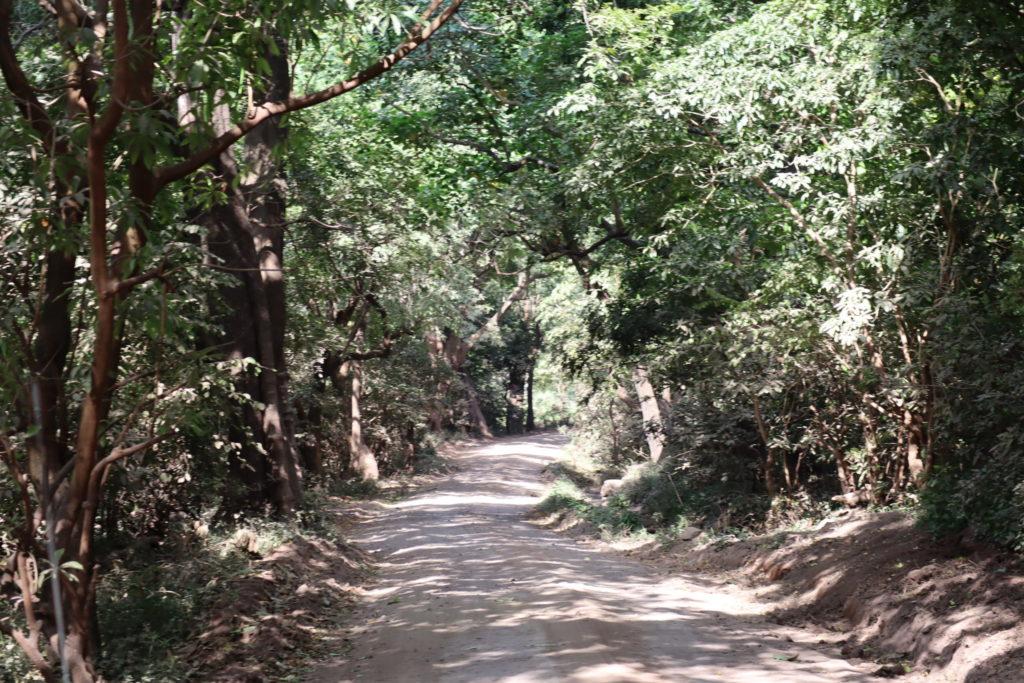 route lac manyara tanzanie safari