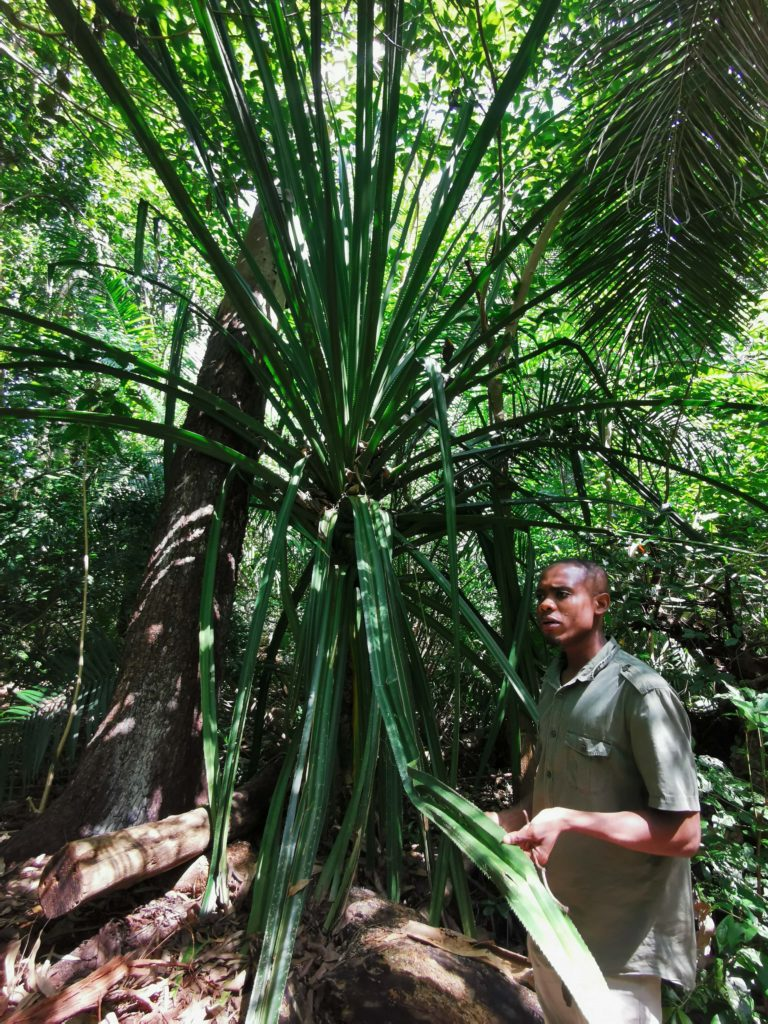 mangove jozani forest zanzibar