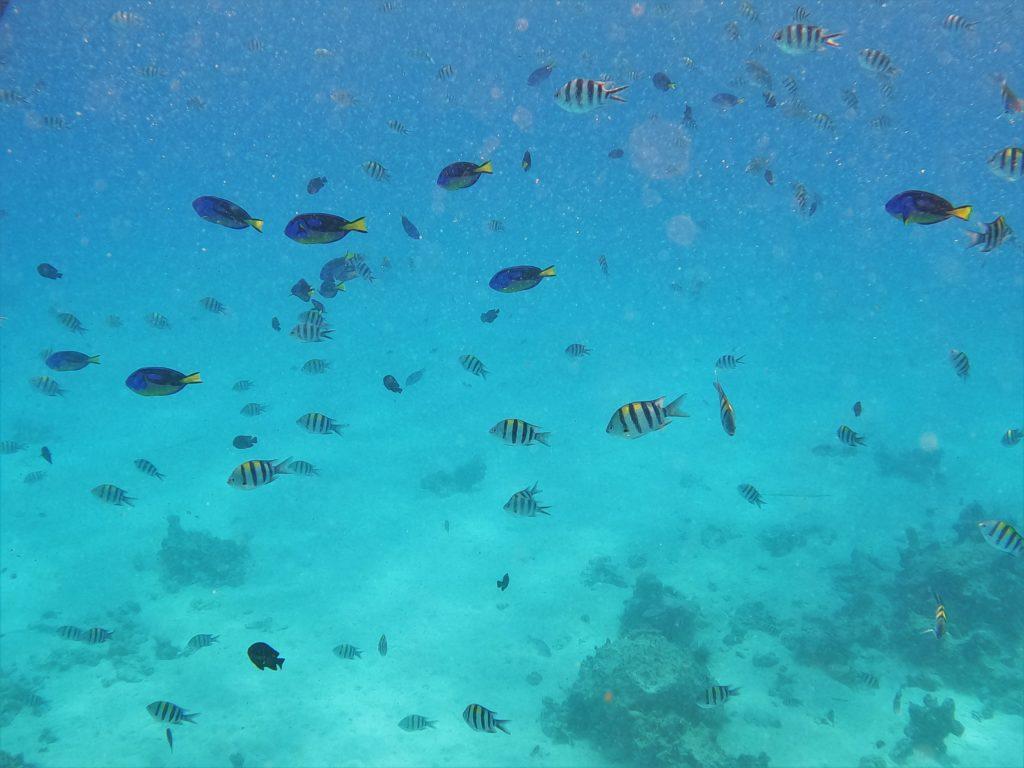 poissons plongee mnemba island