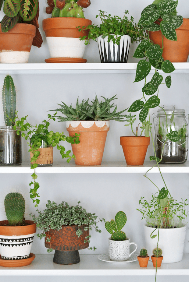 plantes-pots-decores-diy-lili-in-wonderland