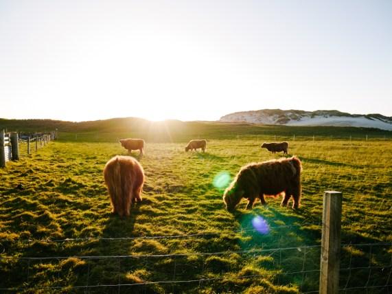 road-trip-ecosse-skye-harris-scotland-liliinwonderland-128