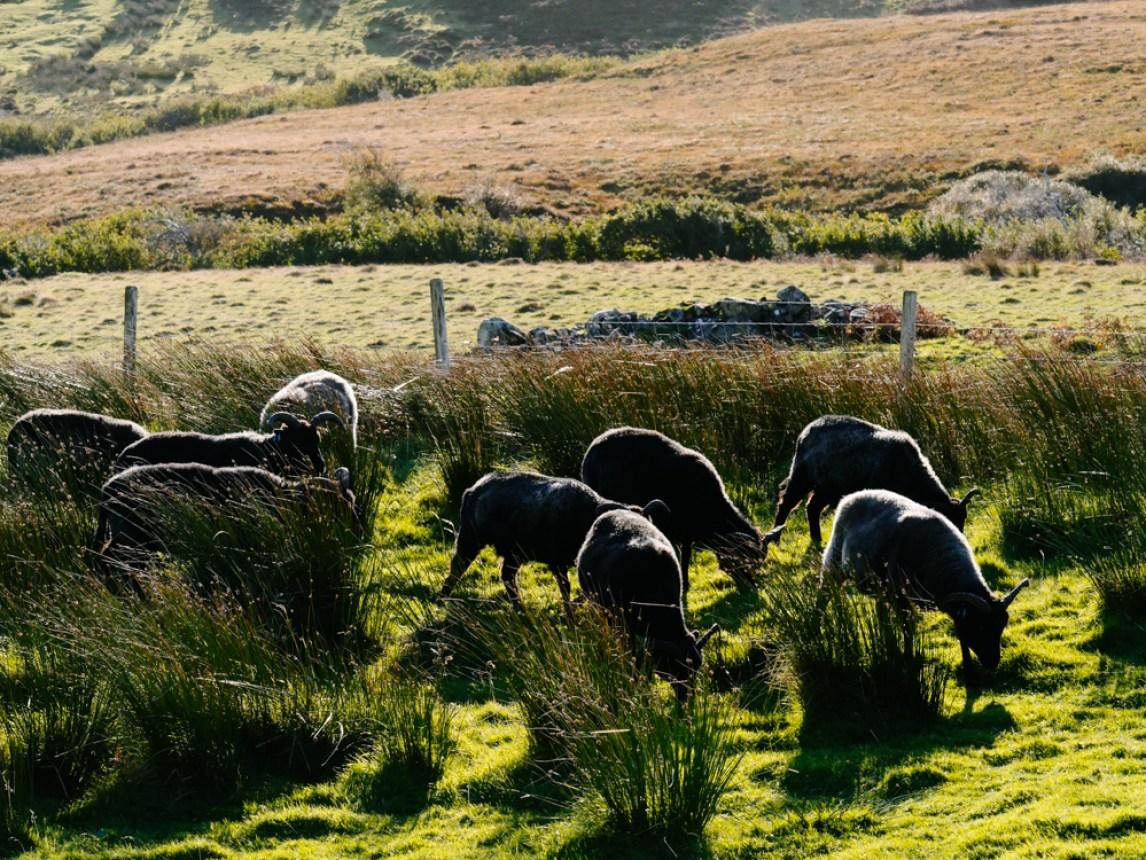 road-trip-ecosse-skye-harris-scotland-liliinwonderland-5